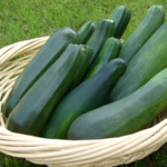 zucchini