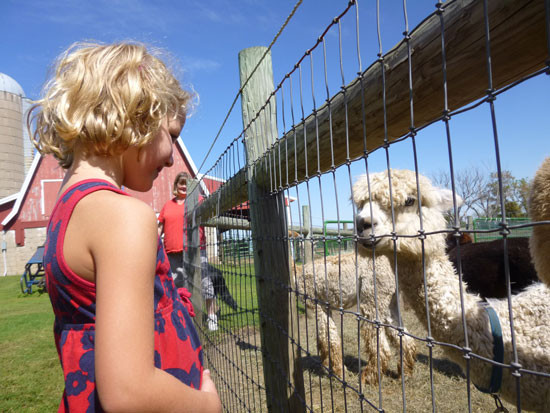 Visiting an Alpaca Farm