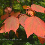 Frugal Ponderings: Fall Edition - Northern Cheapskate