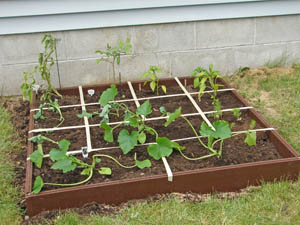 My Very First Vegetable Garden