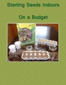 Starting Seeds Indoors on a Budget
