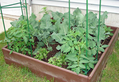One of my garden beds June 2011
