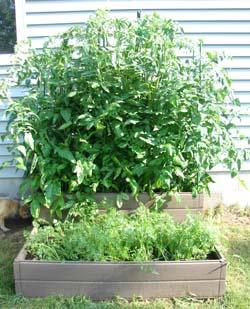 Garden Update: A Rookie Discouraged