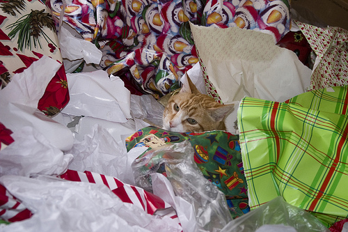 Cat in a pile of wrapping paper