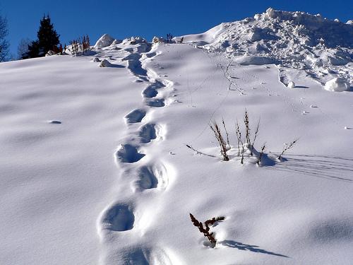 Taking Steps to Get Back on Track