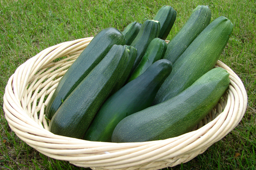 Dealing With an Abundance of Zucchini