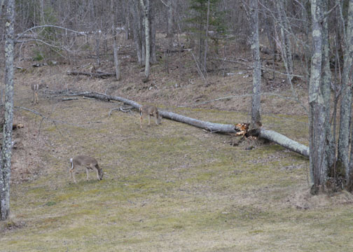Less trees, more deer. Less snow, more grass.  It's all good!