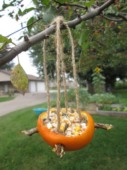 4 Fun and Easy DIY Bird Feeders: Orange Bird Feeder