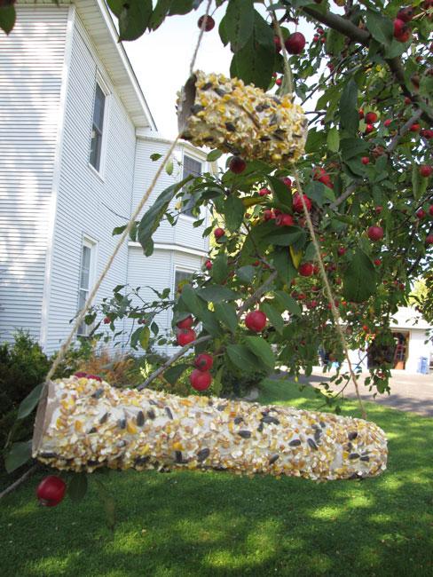 4 Fun and Easy DIY Bird Feeders: Cardbird Tube Bird Feeder