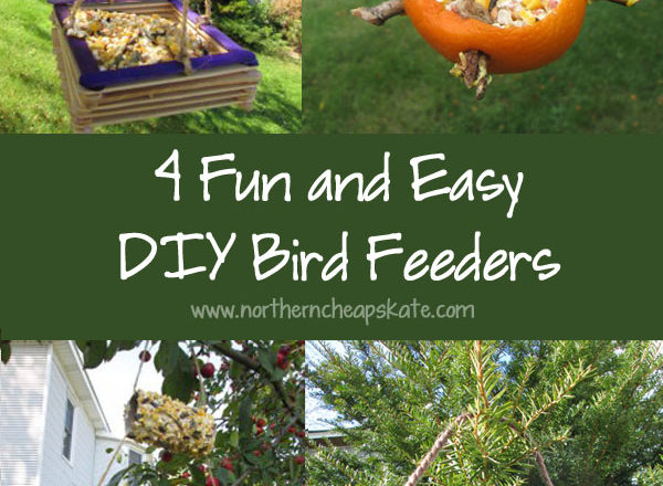 4 Fun and Easy DIY Bird Feeders