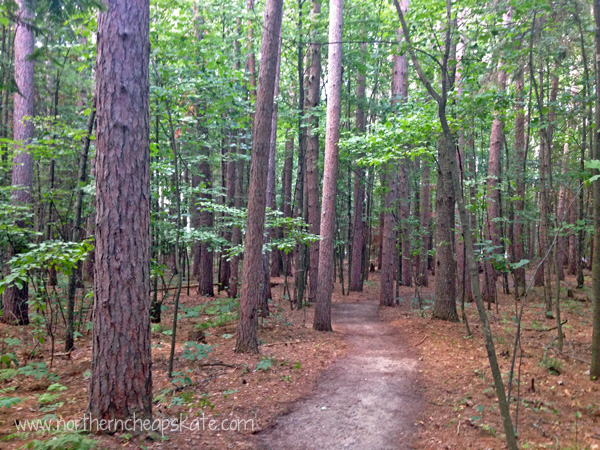 Frugal Summer: Walking in the Woods